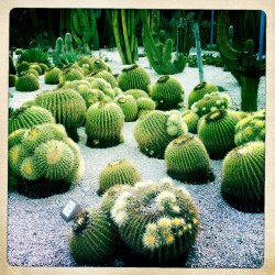 photo of the Cactus Park Barcelona